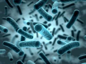 Künstliche Bakterien können bei der Diagnose von Krankheiten helfen
