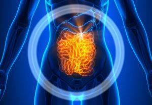 Darm – Kern unserer Gesundheit