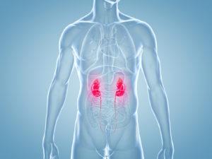 Körpereigene Schadstoffbeseitigung – die Nieren