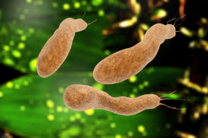 Darmbakterien bestimmen Essverhalten
